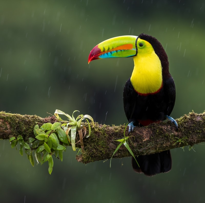 keel billed toucan - Most Beautiful Birds in the World